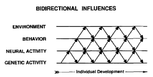 """A simplified scheme of the developmental systems view showing a hierarchy of four mutually interacting components in which there are ""top-down"" as well as ""bottom-up"" bidirectional influences."" (from Gottlieb, 1991)"